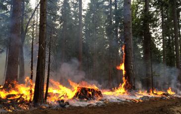 fire stump by ricky satomi