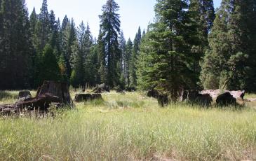 forest photo ricky satomi